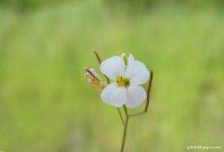 natura, kwiat, trawa, zieleń
