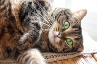 Kot, zwierzęta domoiwe