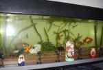 rybki w akwarium