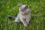 Szary kotek na trawie