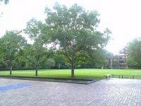 pielęgnacja drzew w mieście