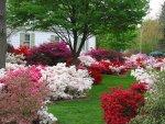 ogród, kwiaty, rośliny