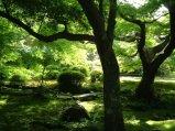 Ogród pełen cienia