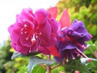 ładny bukiet kwiatów