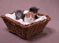 koty w koszyku